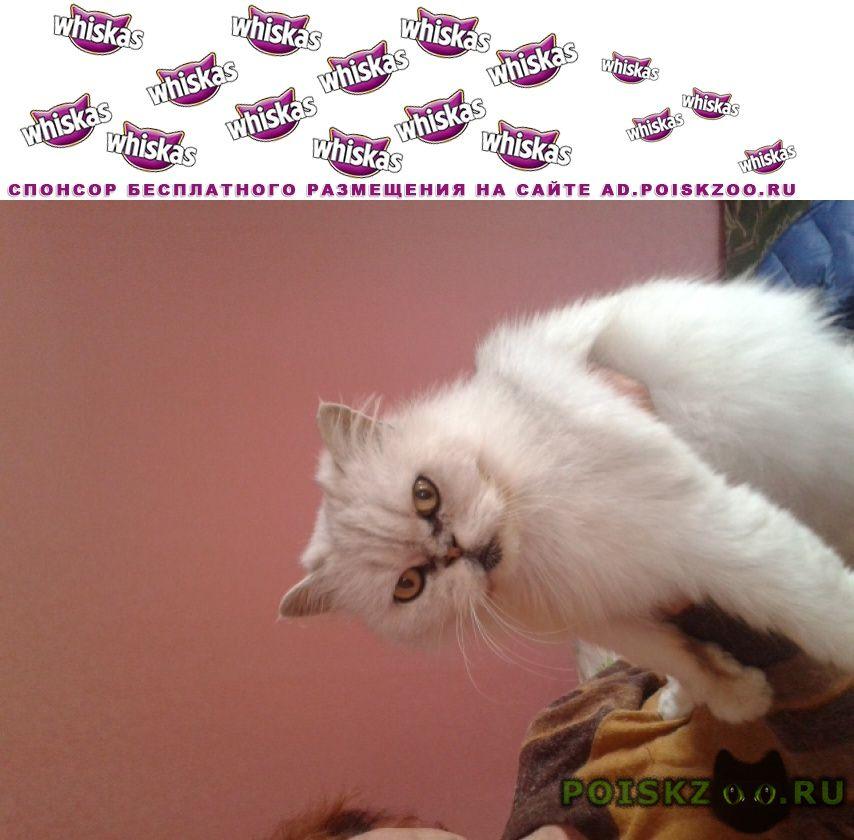 Найдена кошка г.Саратов