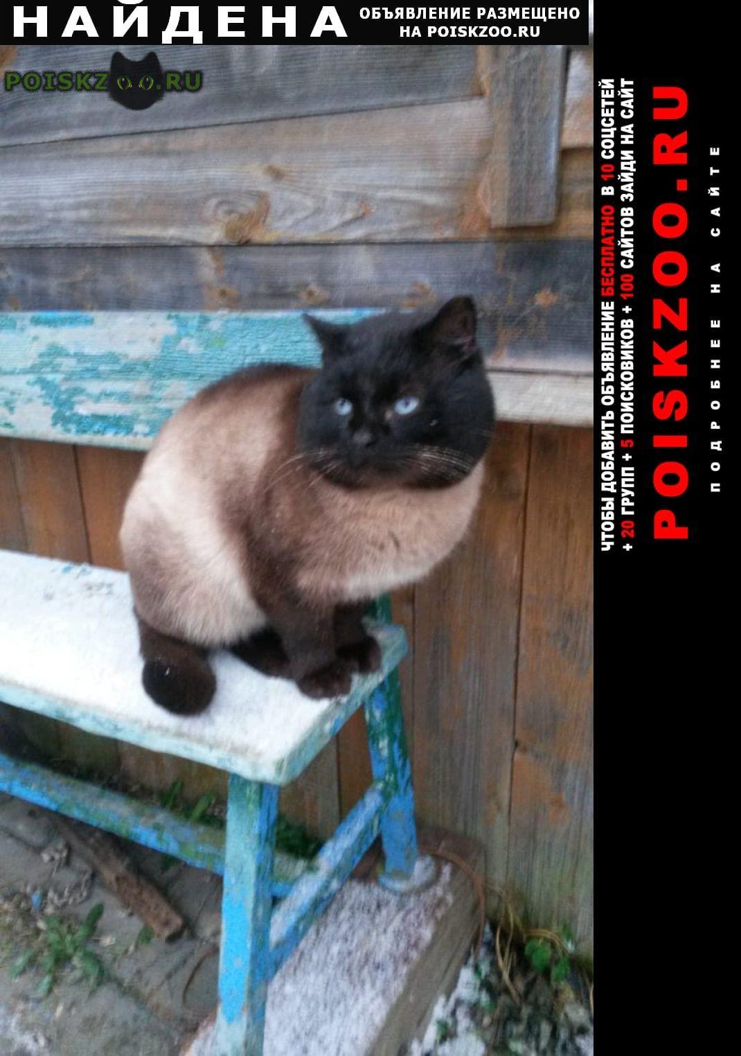 Найден кот ищем новых или старых хозяев Вербилки