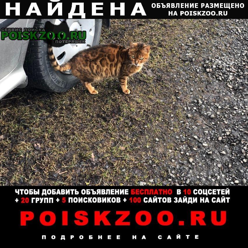 Найдена кошка срочно  Санкт-Петербург