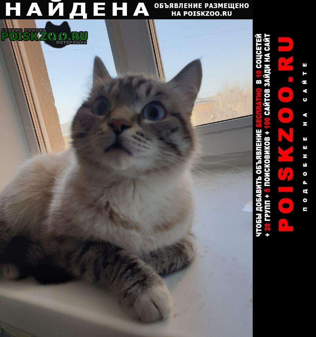 Найдена кошка Красноярск