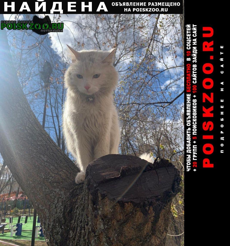 Найден кот в зюзино Москва