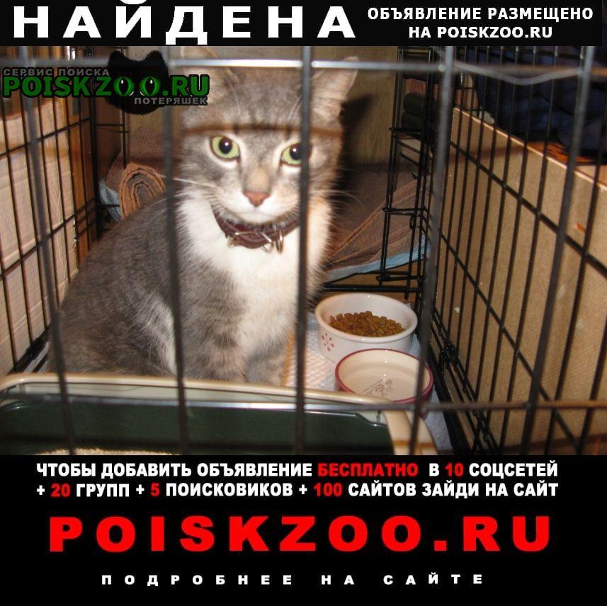 Найдена кошка 19 апреля на 16 парковой, 6 Москва