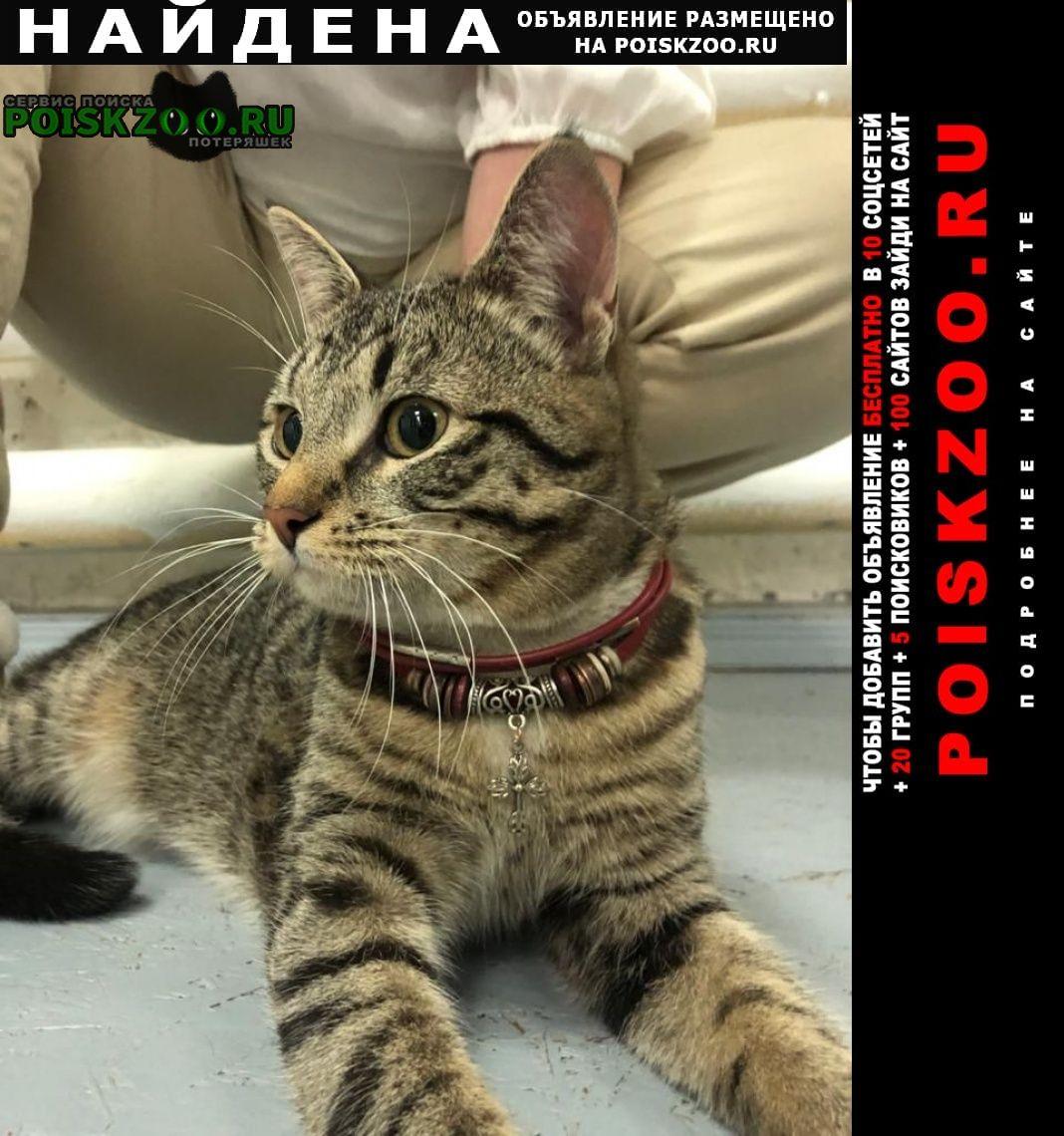Найден кот на шее крест на красном шнурке Москва