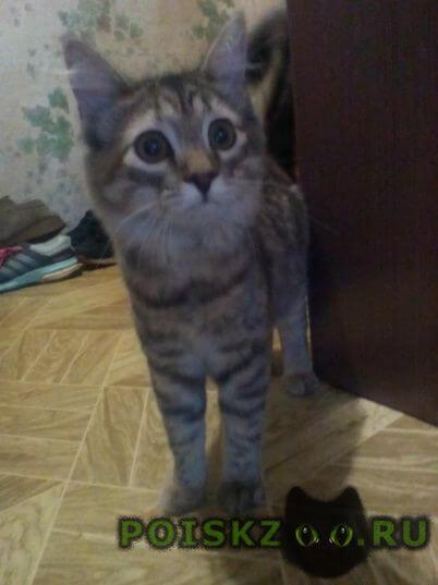Найдена кошка г.Киров (Кировская обл.)