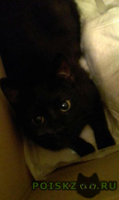 Найдена кошка черна, проспект мира-ростокинская г.Москва