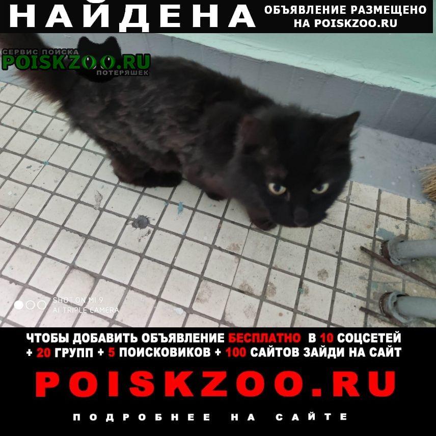 Найдена кошка с зеленым ошейником от блох Москва