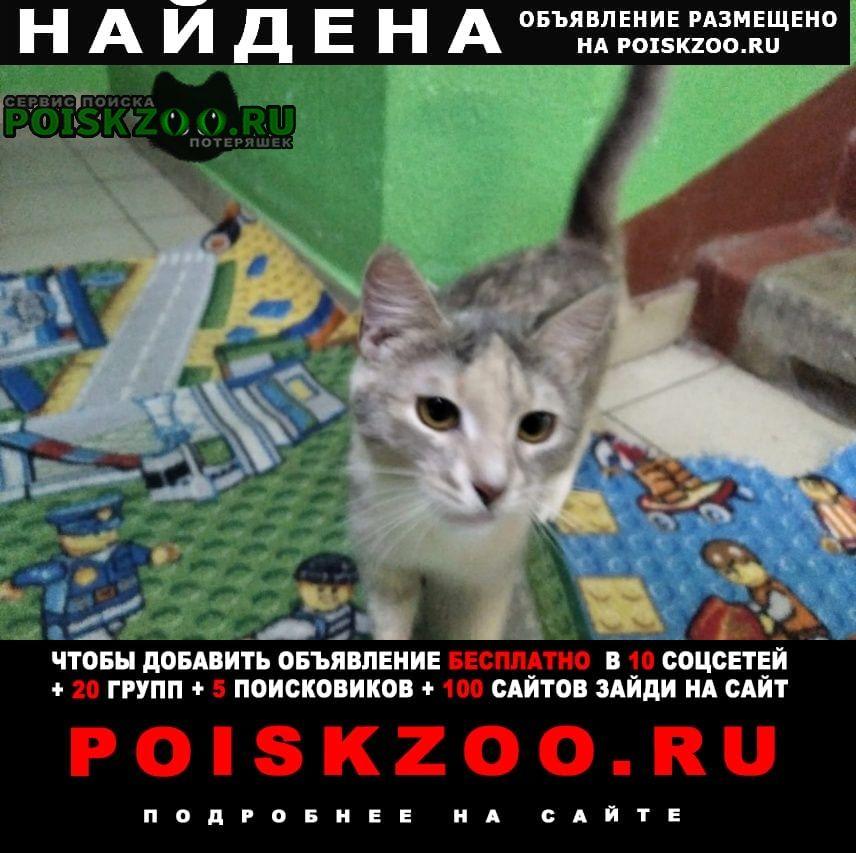 Найдена кошка бирюлево восточное. нашли кошку Москва