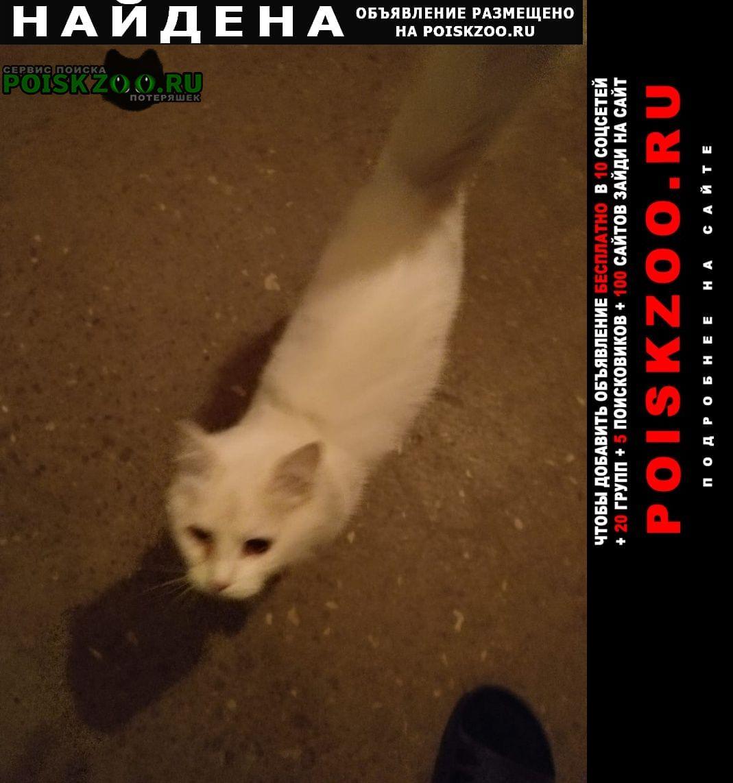 Найдена кошка Обнинск