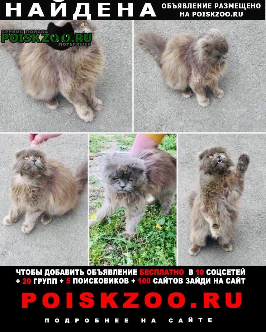 Найдена кошка Сальск