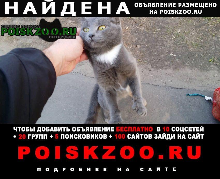 Найдена кошка серая р-н богородское Москва
