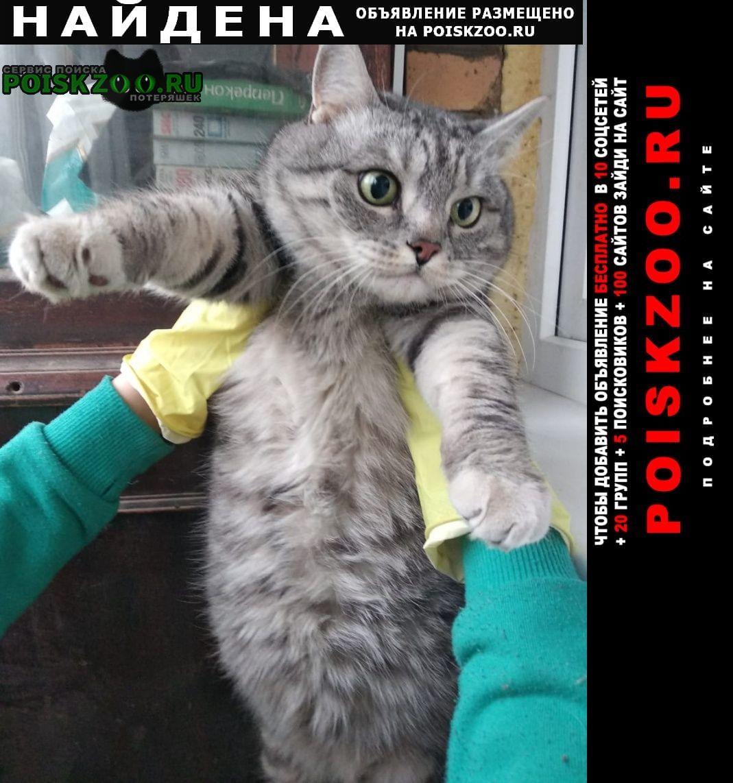 Найден кот серый дымчатый кастрированный Москва