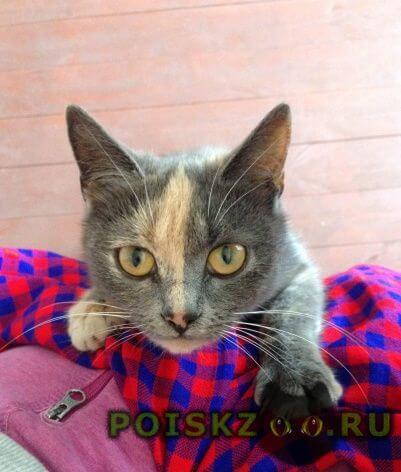 Найдена кошка или кот г.Ивантеевка (Московская обл.)