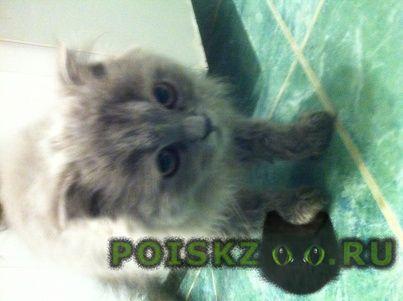 Найден котёнок г.Смоленск
