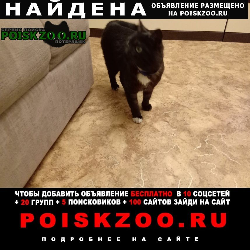 Найден кот Владимир