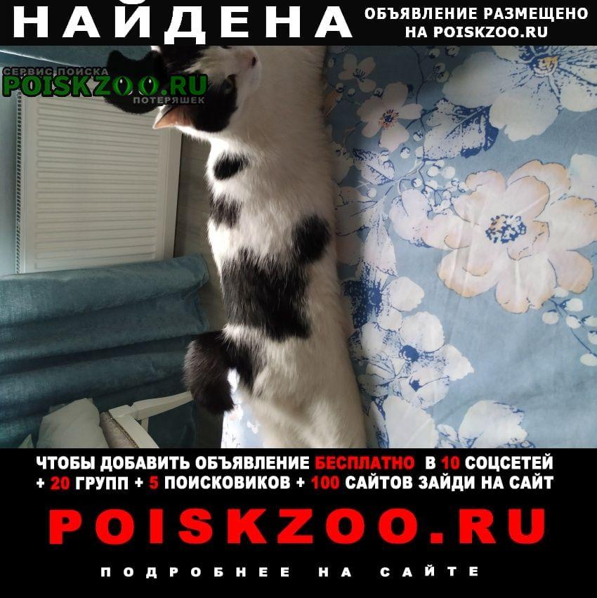 Найден кот Одинцово