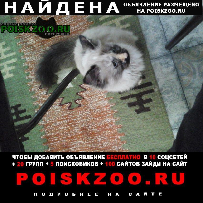 Найдена кошка Кисловодск