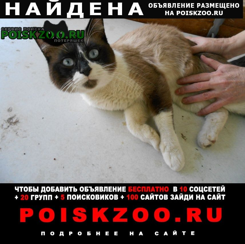 Найден кот нашёлся сиамский г.Волгоград