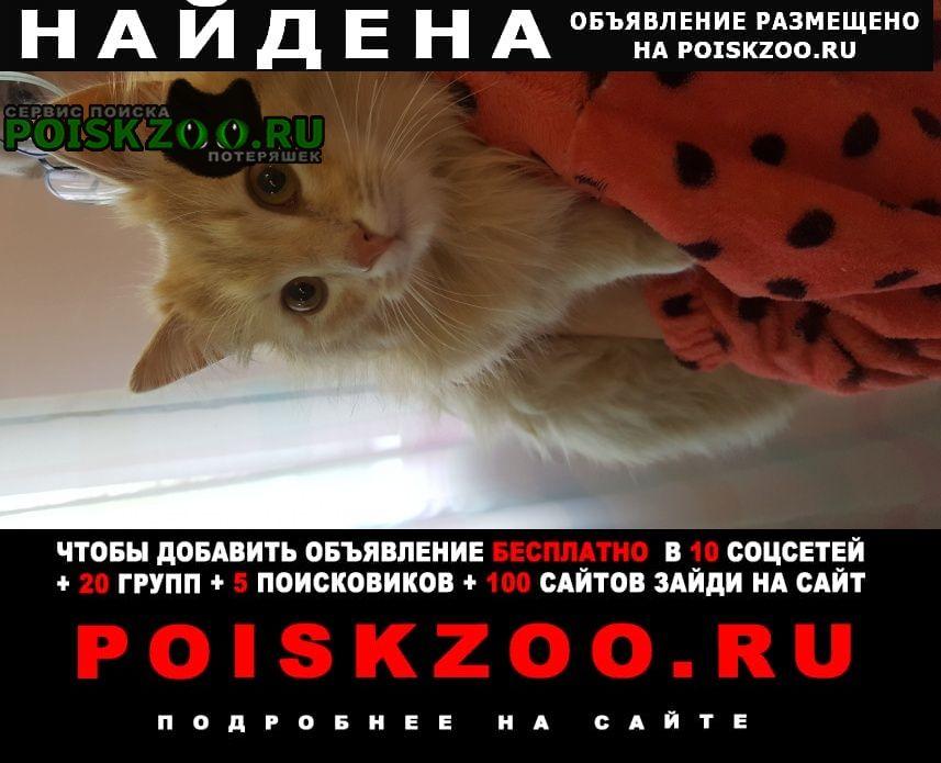 Найдена кошка рыжий котенок Домодедово