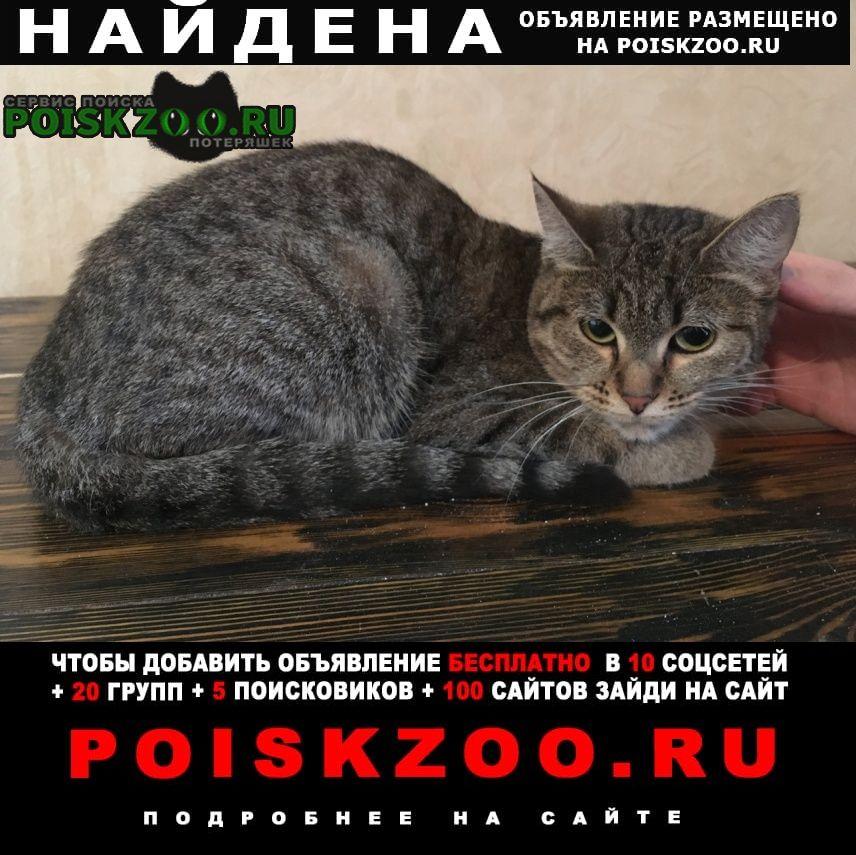 Найдена кошка по адресу пушкина 4 г.Екатеринбург