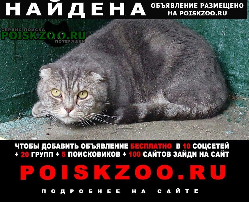 Найдена кошка нашли (кот) Москва