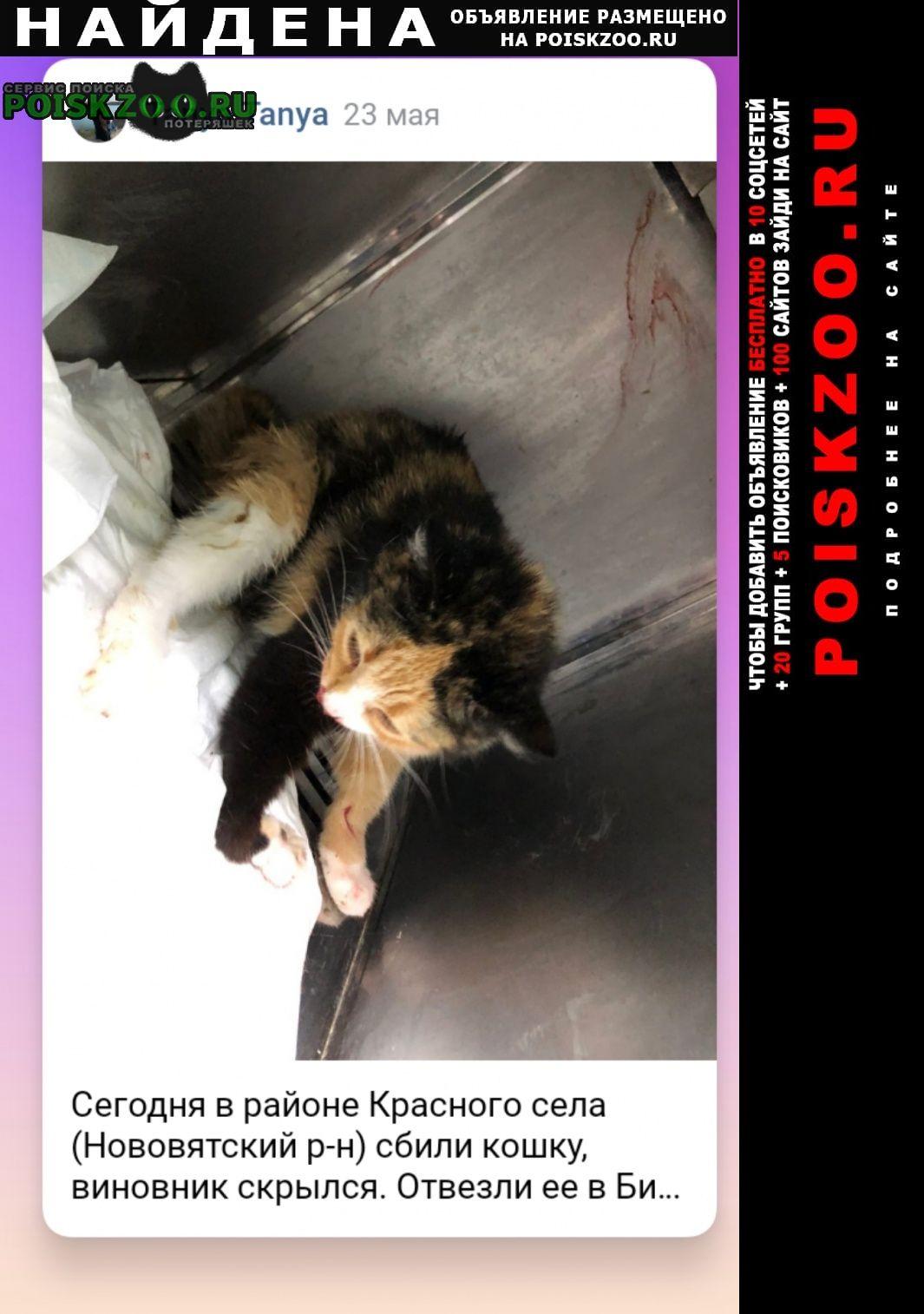 Найдена кошка сбита машиной г.Киров (Кировская обл.)