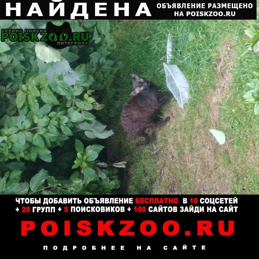 Найдена кошка возможно сфинкс - ушастая и лысая Санкт-Петербург