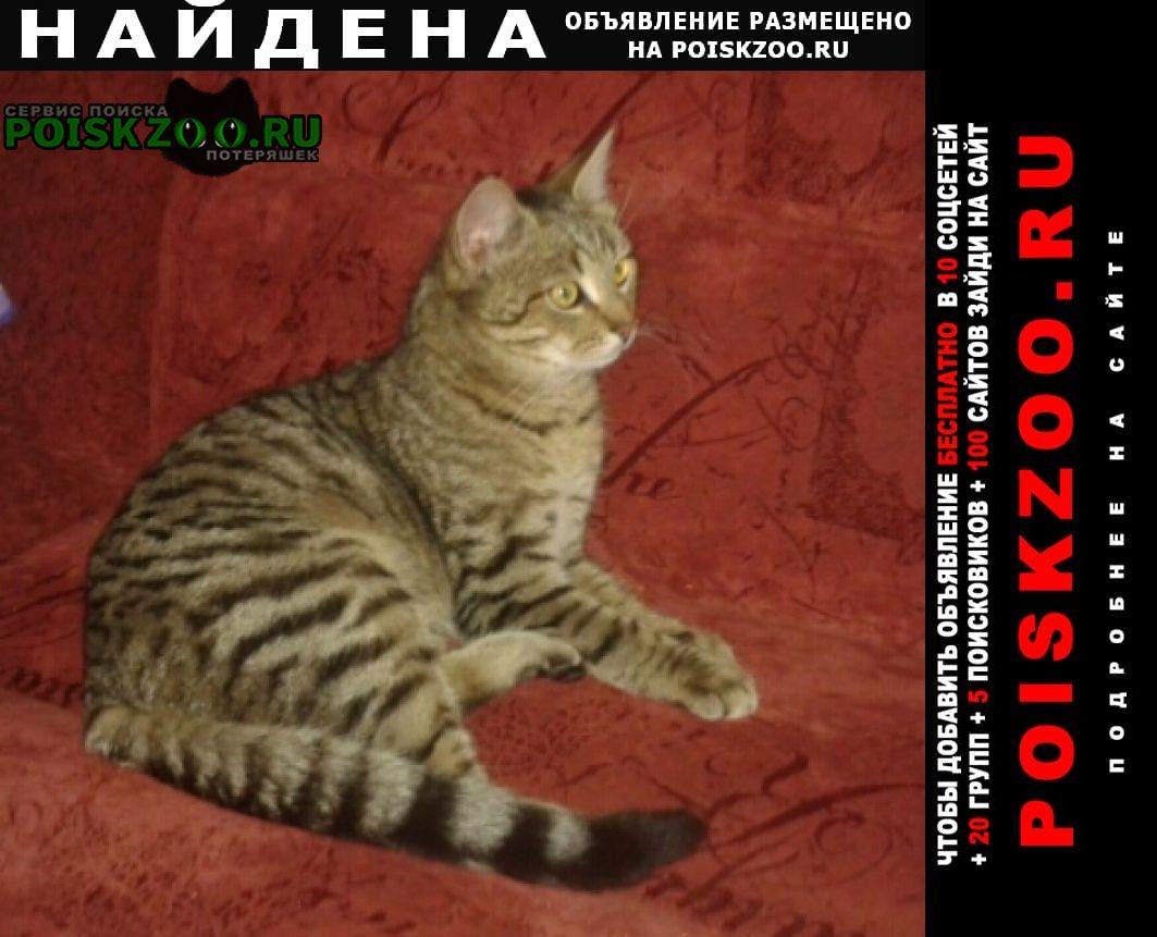 Найден кот молодой Дзержинск