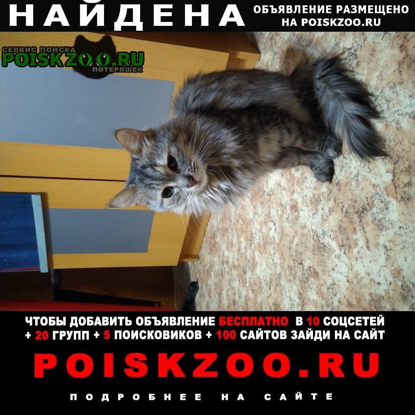 Найдена кошка горчакова д1 к2 Москва
