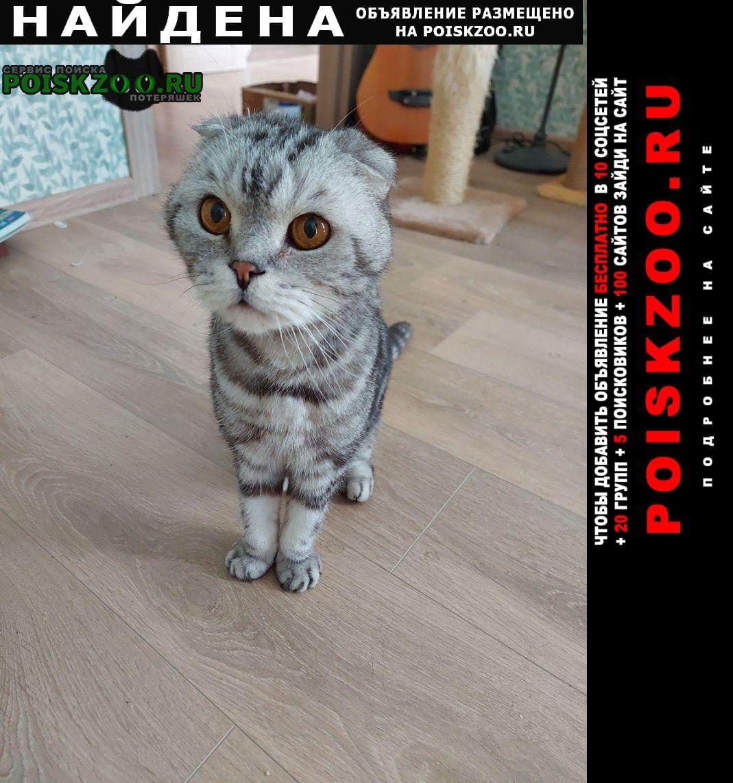 Найден кот вислоухий мраморного окраса Москва