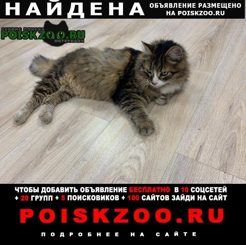 Найдена кошка метро тульская духовской переулок д 17 Москва