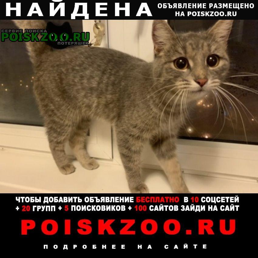 Найдена кошка домашняя на беляево Москва