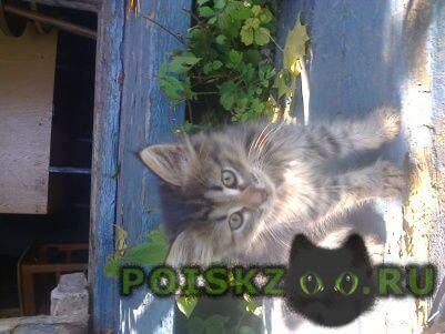Найдена кошка г.Сергиев Посад