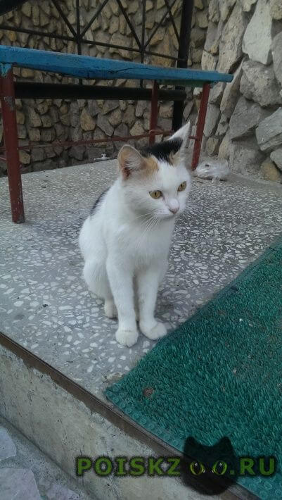 Найдена кошка -богатка г.Пермь