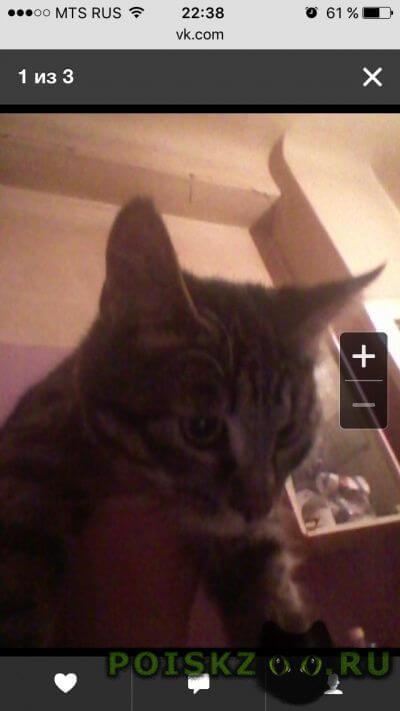 Найден кот г.Нижний Новгород