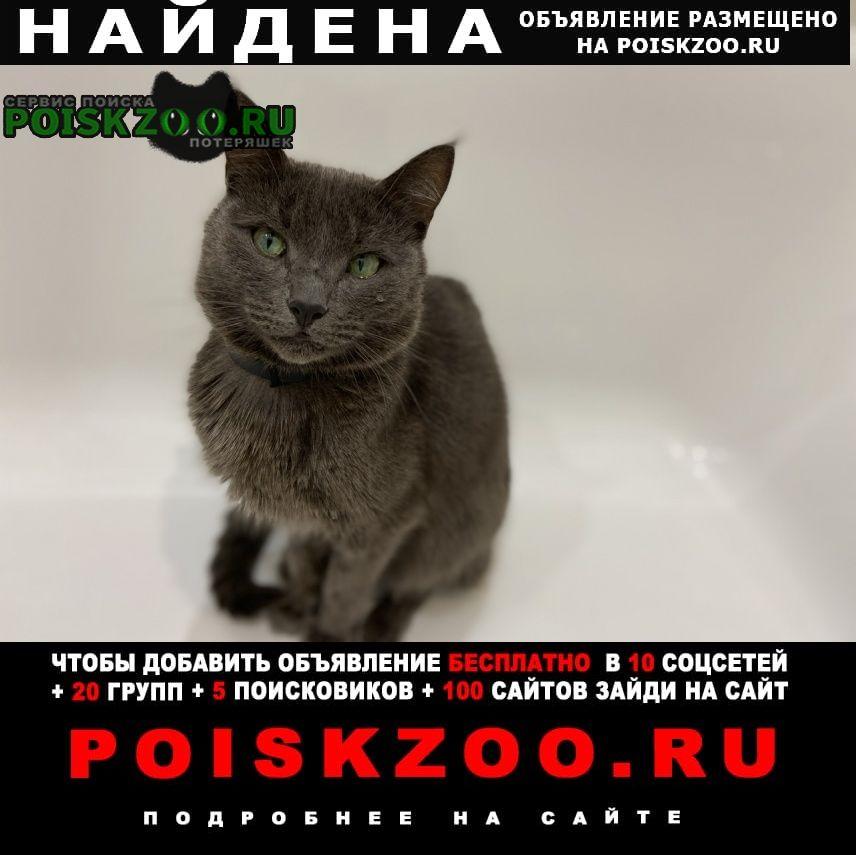 Найдена кошка молодой котик, фенотип русская го Москва