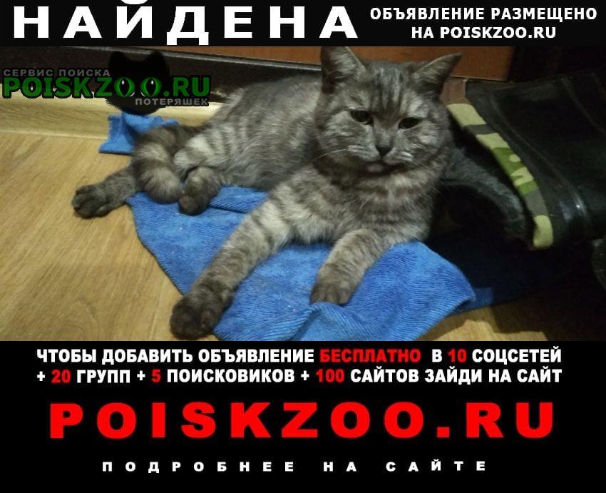 Найдена кошка Сызрань