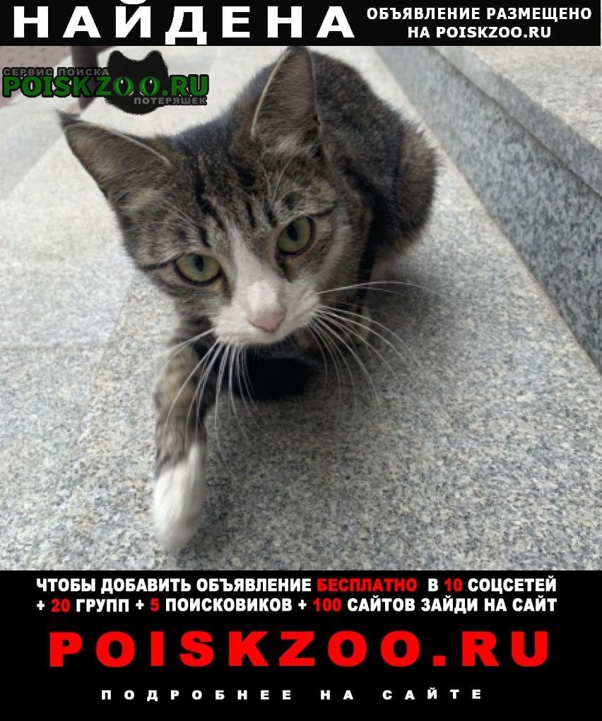 Найдена кошка Реутов