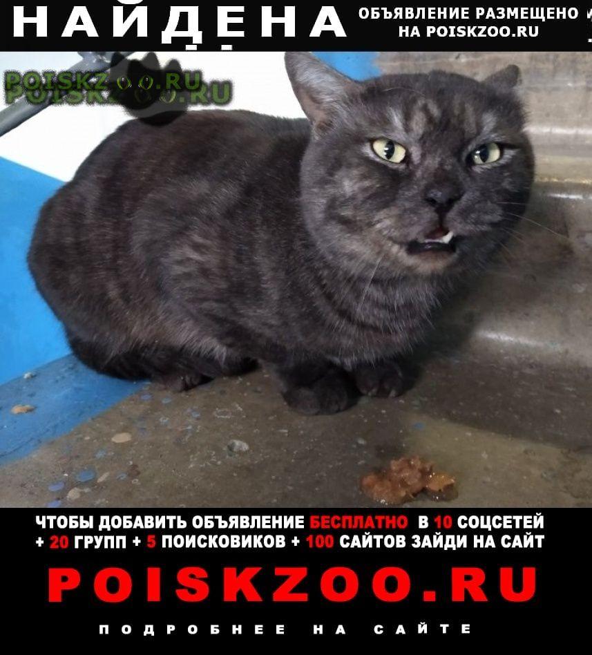 Найден кот домашний, породистый г.Чехов