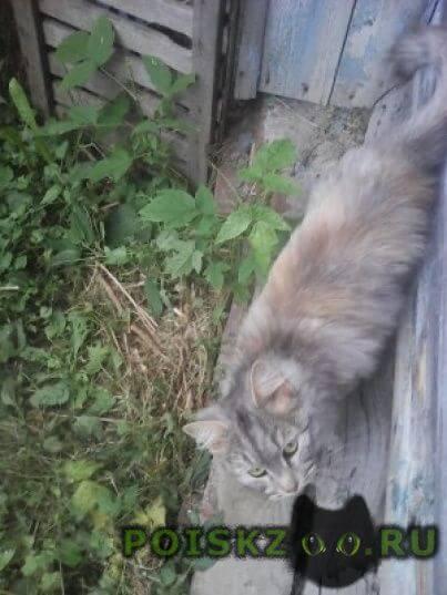 Найдена кошка на улице стахановской г.Нижний Новгород
