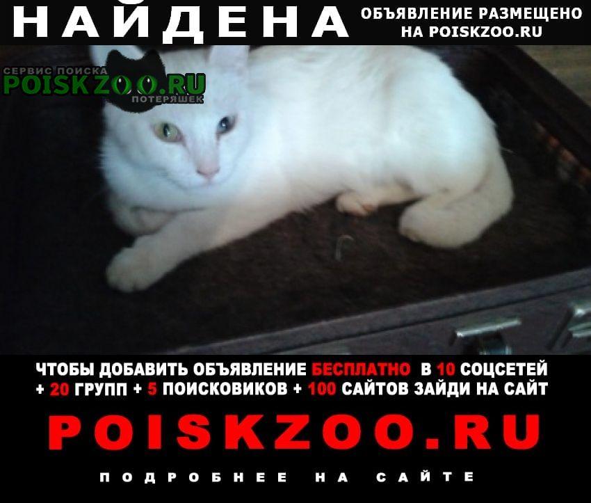 Найдена кошка еще в ноябре 2020 г. Ставрополь