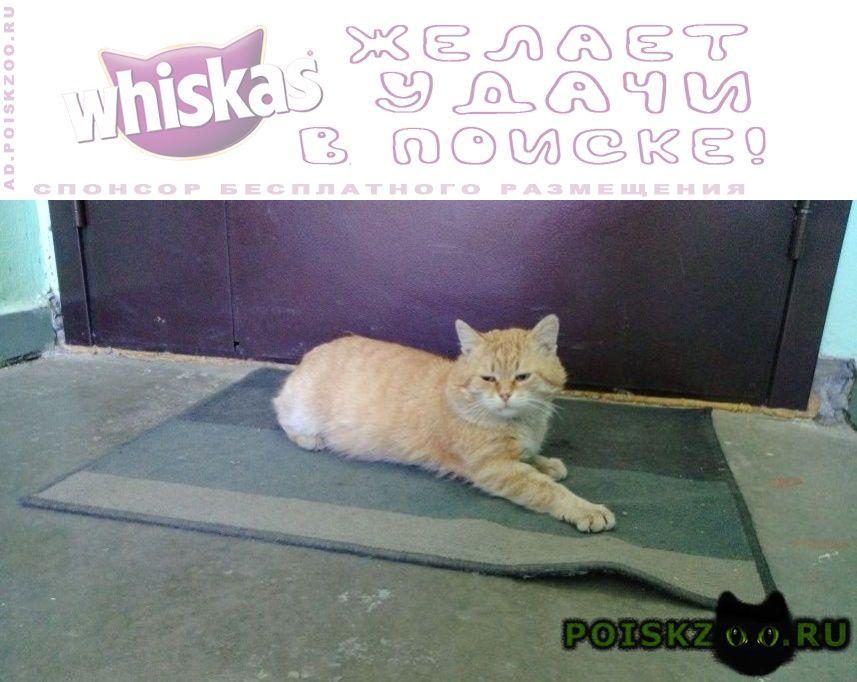 Найден кот красивый, добрый и пушистый. г.Москва