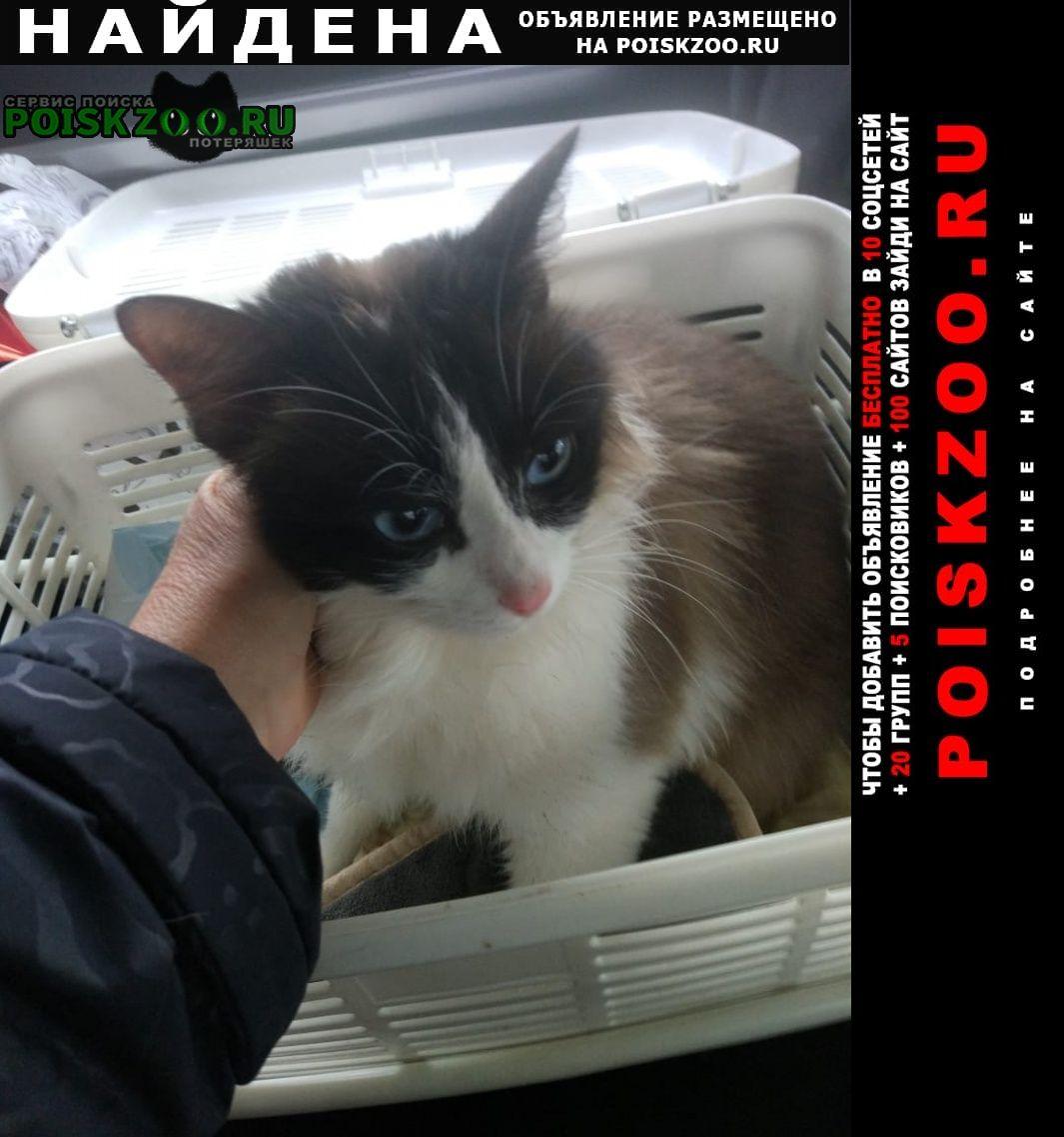 Найдена кошка ясенево Москва