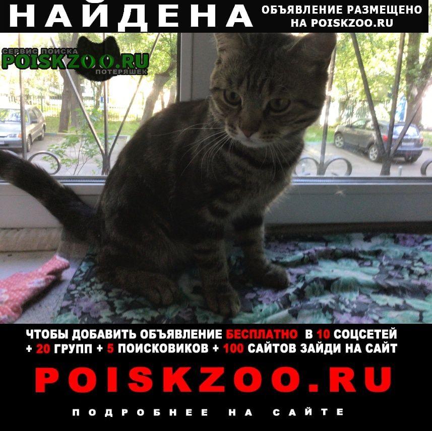 Найден кот 23 мая в люблино Москва