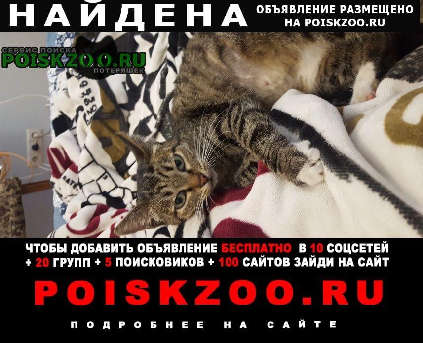 Найдена кошка в сао, улица софьи ковалевской Москва