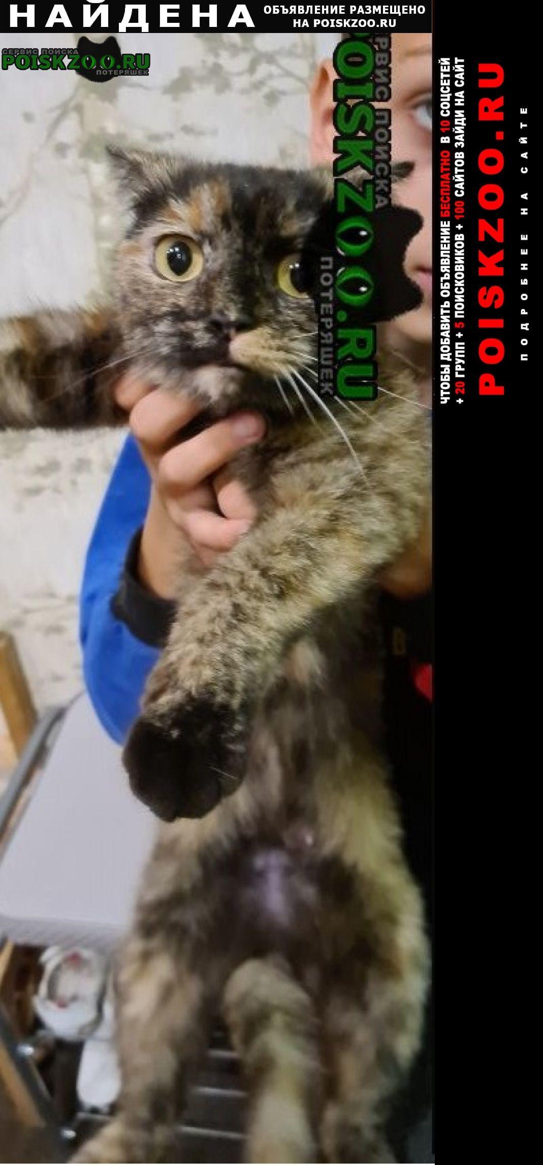 Найдена кошка мкр 7 небо, волжская наб. 23. Нижний Новгород