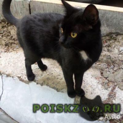 Найдена кошка кошечка г.Новосибирск