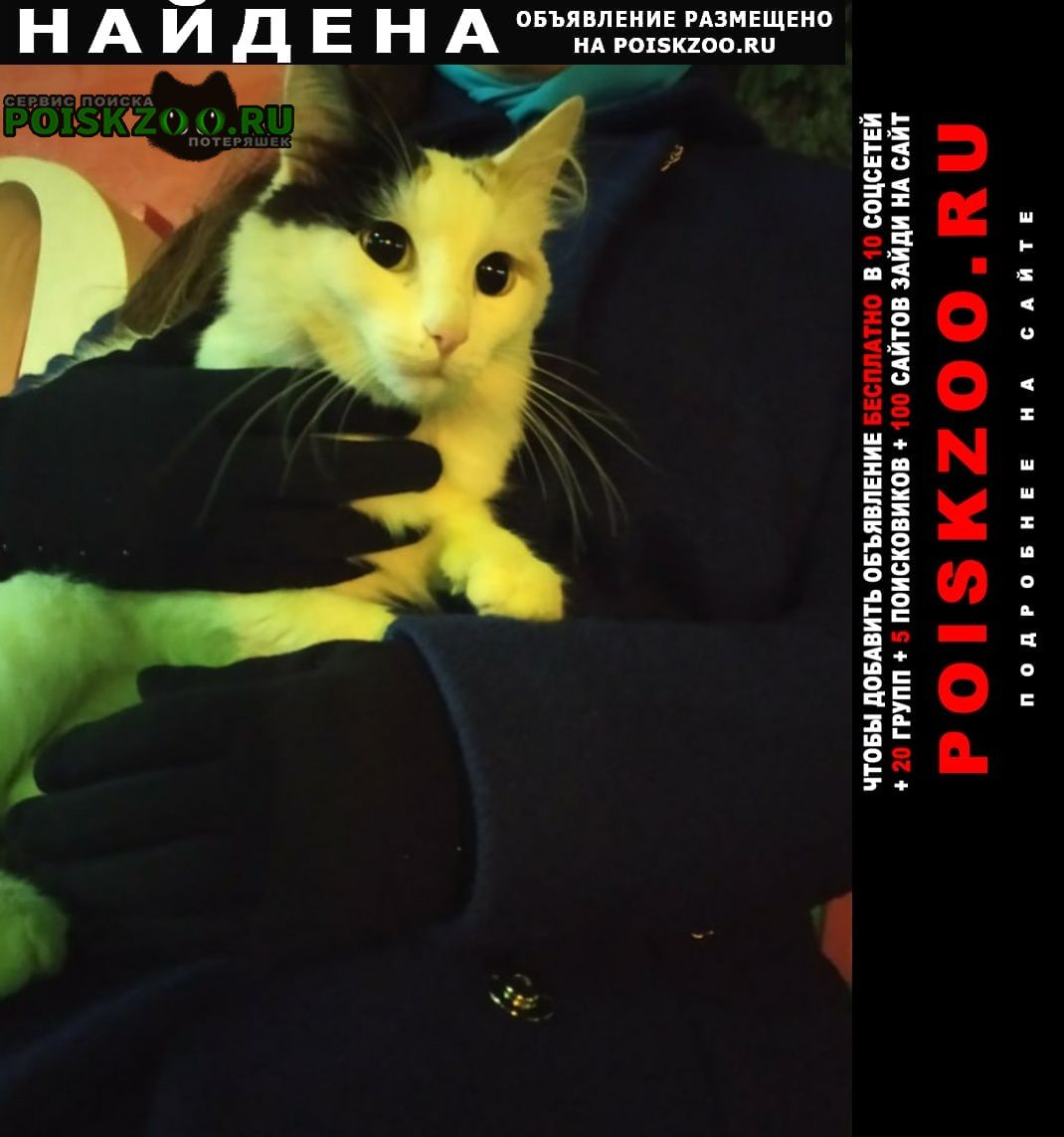 Найдена кошка в кировском районе Ярославль
