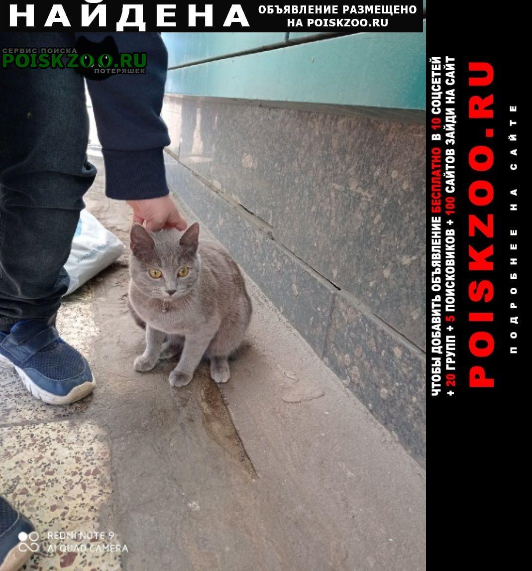 Найдена кошка серая, напугана, ласковая ошей Москва