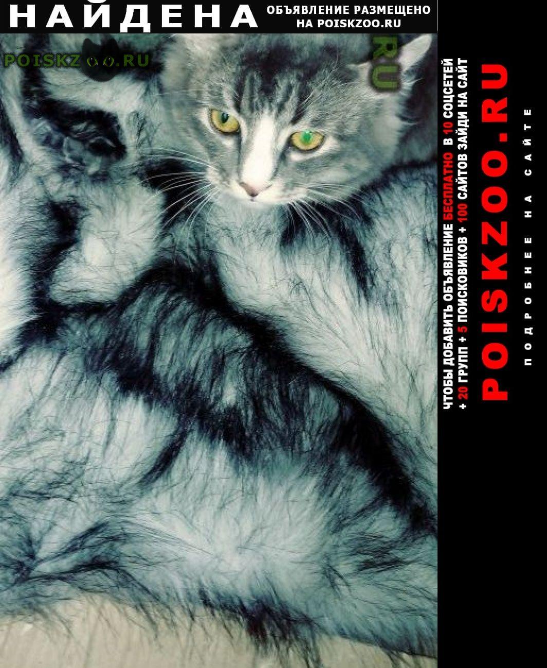 Найден кот кто потерял? Воронеж