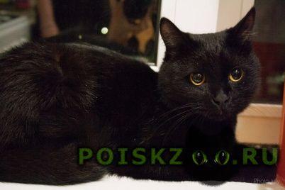 Найдена кошка кот( ) черного цвета г.Пермь
